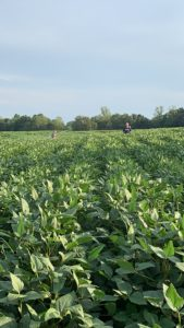 Cover photo for Foliar Feeding Soybeans at Beginning Pod: 2019 Research Update