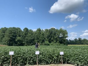 Cover photo for Webinar RECORDING: Late Season Soybean Management
